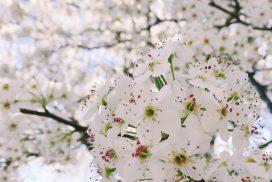 #CapForStrat Avengers assemble cancer white blossom